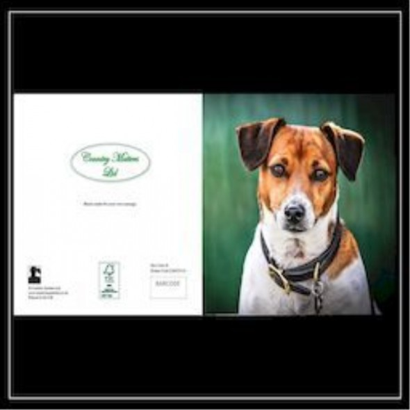Country Matters Card - Amber the Jack Russell