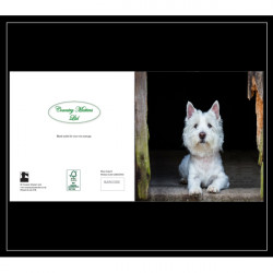 Country Matters-Card -Westie